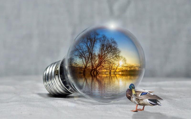 Water, Reflection, Close Up, Bird royalty free stock image