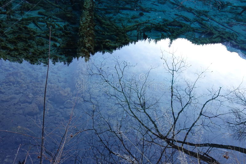 Water reflection - Close up. A scene captured at Jiuzhaigou, Sichuan China. Image of tree branches is reflected from the calm lake water at Jiuzhaigou. The water stock photography