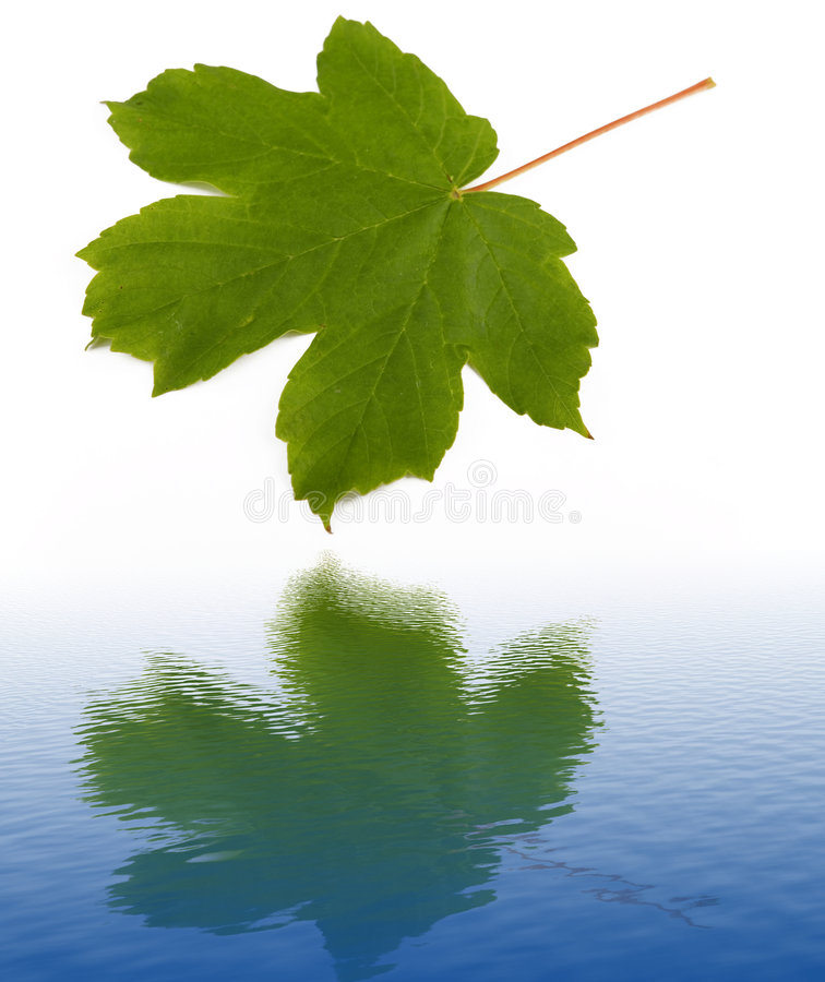 Download Water Reflection Of Green Leaf Stock Photos - Image: 6156713