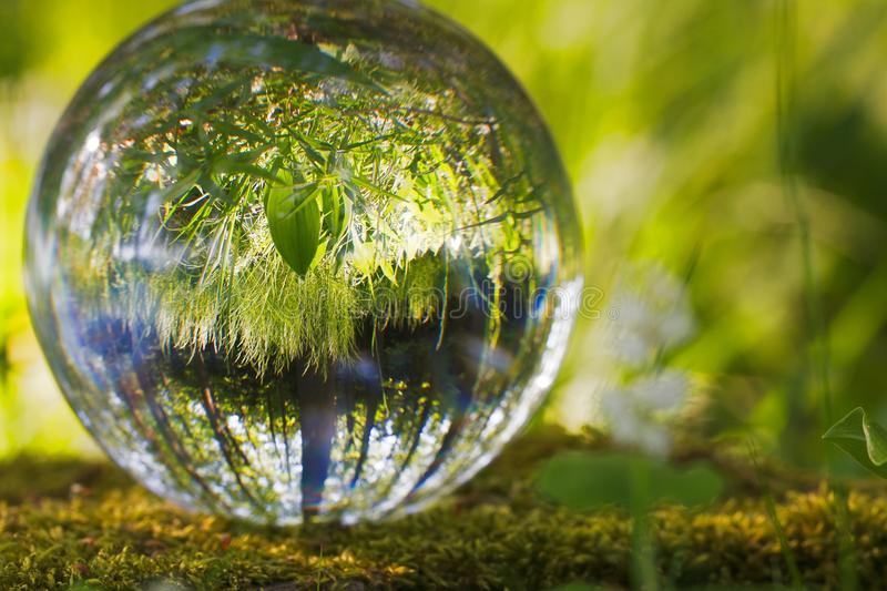 Water, Reflection, Nature, Green royalty free stock photo