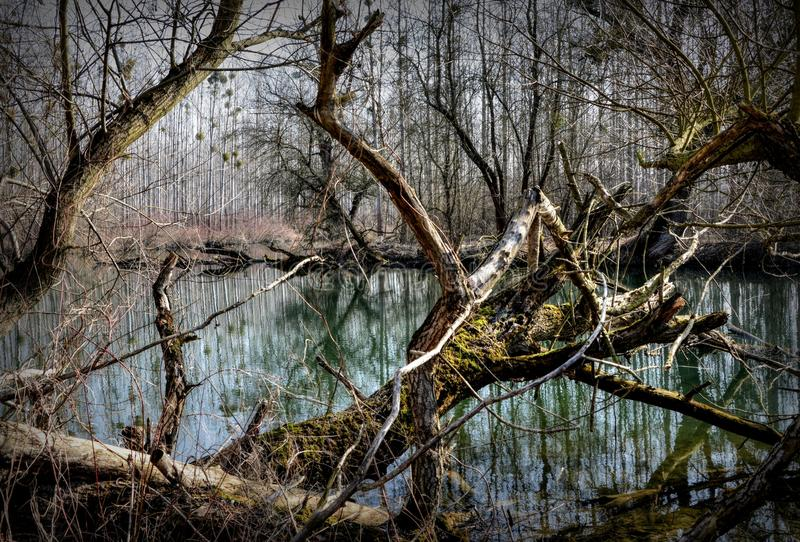 Water, Reflection, Nature, Tree royalty free stock photo
