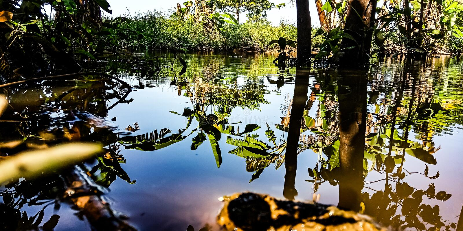 The water reflection stock images