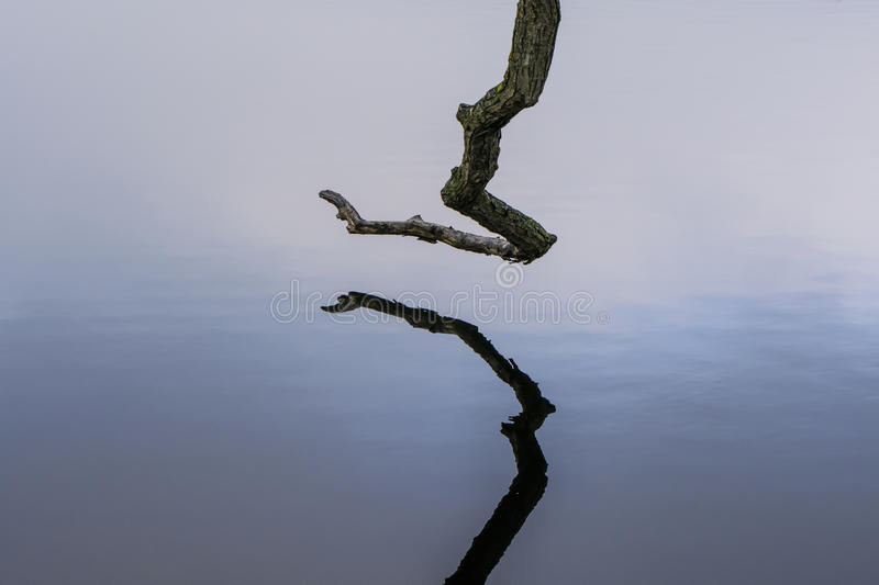 Water reflection of single bare branch. Single bare tree branch reflecting in the water of a lake royalty free stock image