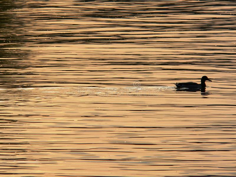 Water, Reflection, Sky, Water Bird royalty free stock photos