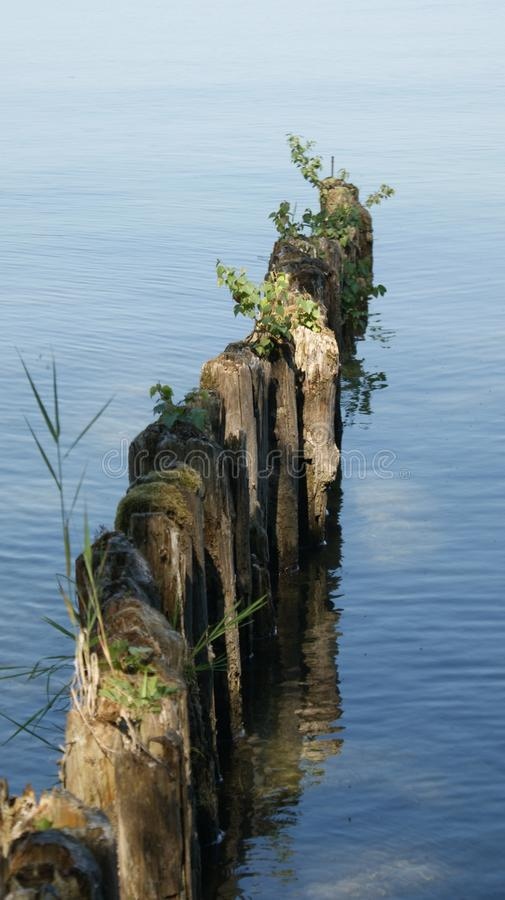Water, Reflection, Tree, Sea stock photography