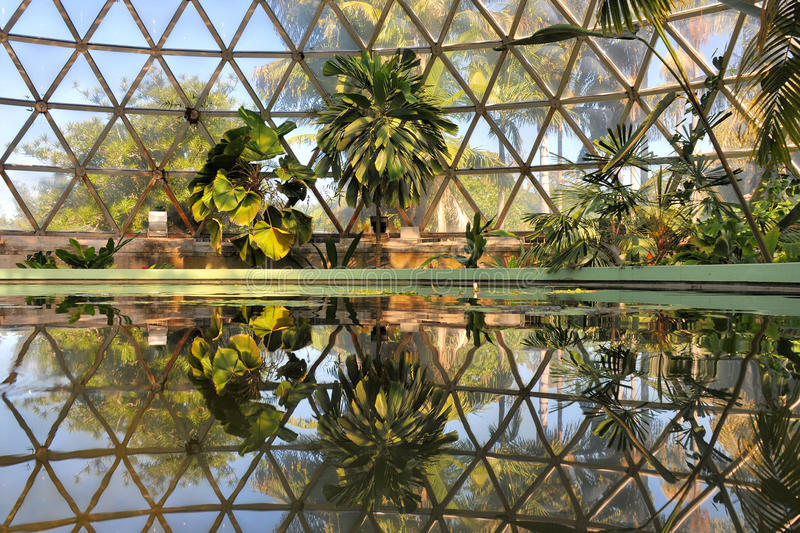 Water reflection in the Tropical Dome. Frog perspective in the Tropical Dome with reflection on the water stock image