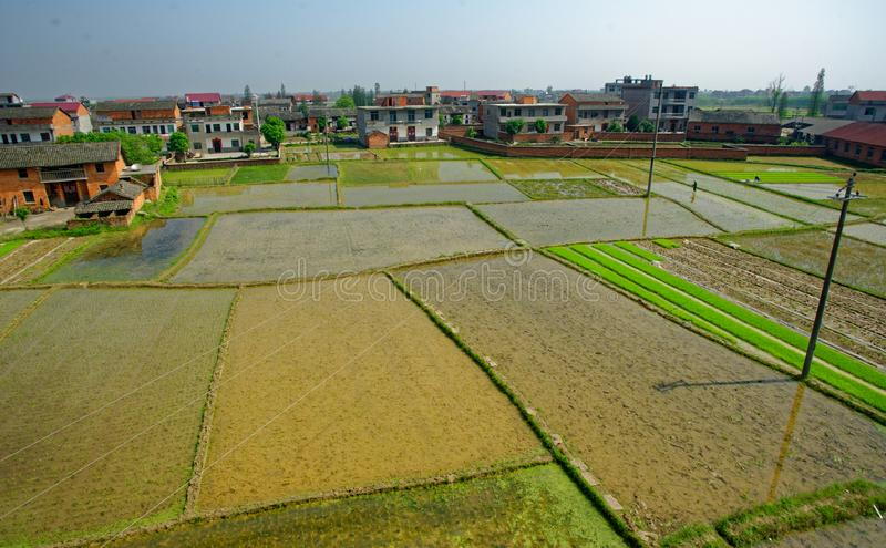 Rice paddy field. Water rice fields in Jiangxi, in the southern part of China, about half of the population in China are staple food for rice stock images