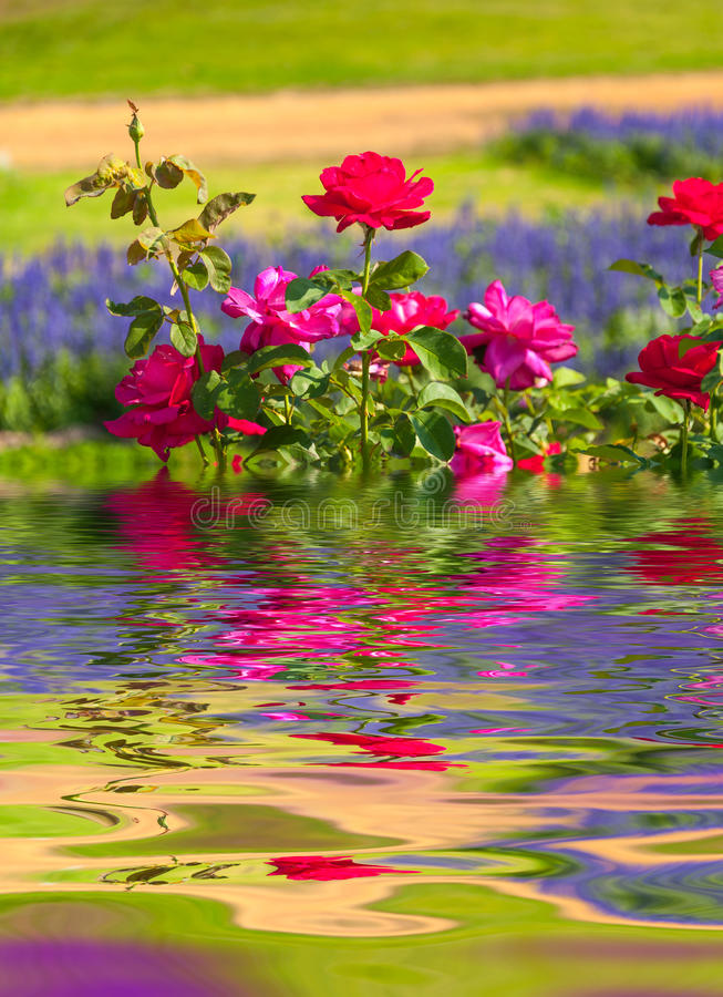 Water Ripple and reflections of Flora on water. With beauty natural background stock photos