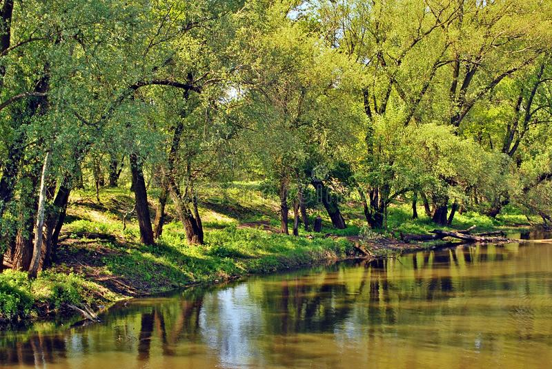Water of river. Tree near the water of river in sunny spring day stock images