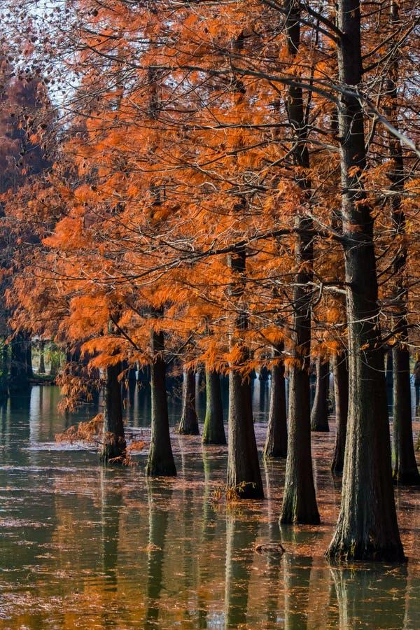 Water rood bos royalty-vrije stock fotografie