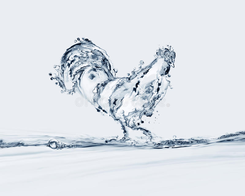 Water Rooster. A rooster made of water walking in water royalty free stock image