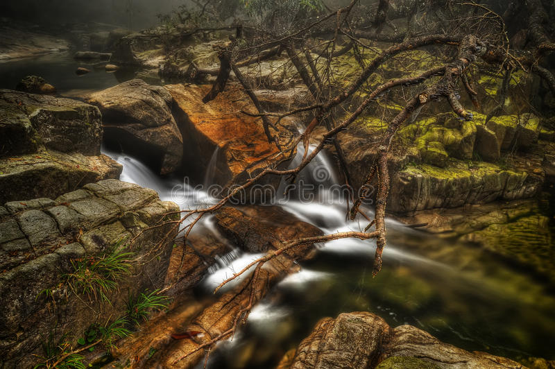 Download Water running stock image. Image of riverbed, forest - 25261421