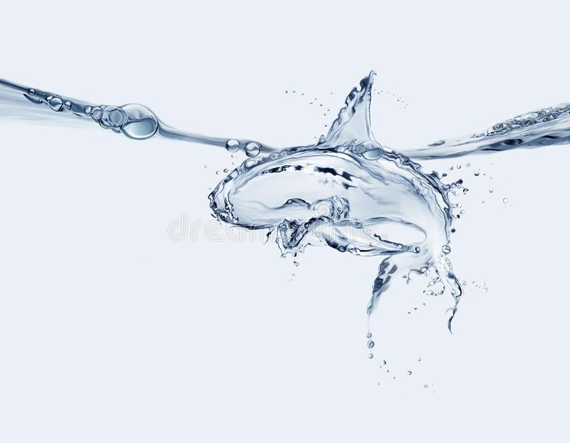 Water Shark stock photo