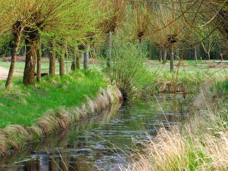 Download At the water side. stock image. Image of rivulet, forest - 103069