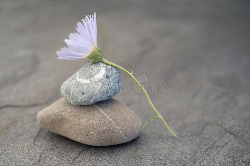 Simple Circle Stone Zen Flower stock images