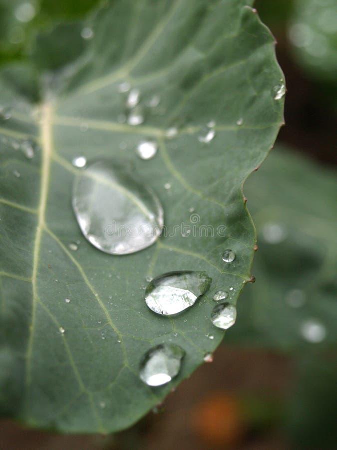 Water splash on the cabbage