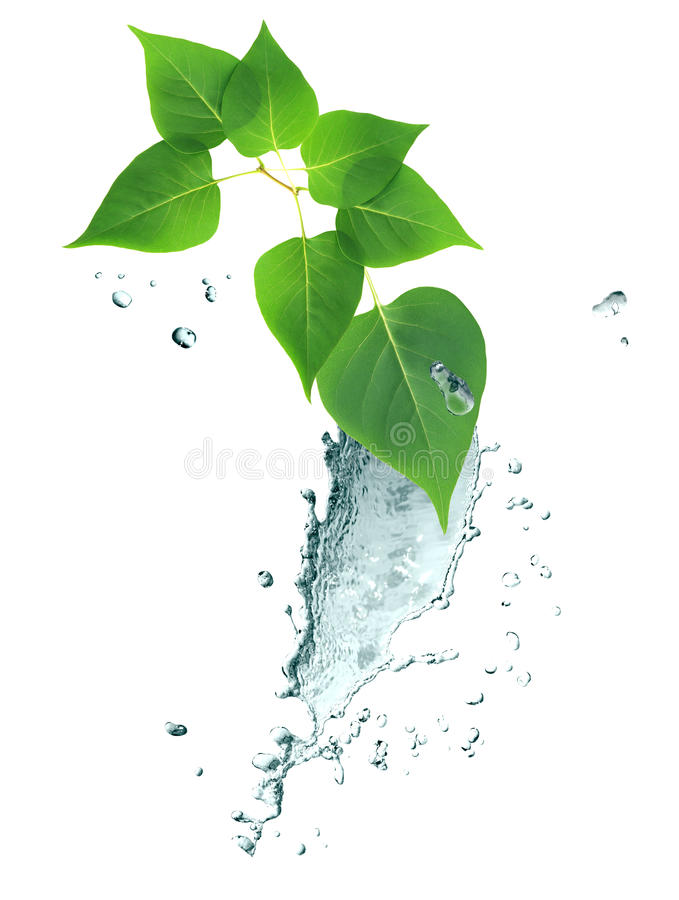 Water Splash And Leaves. Nice border made from splashing water and twig of green leaves stock image