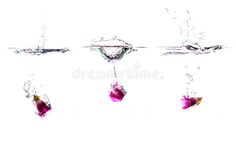 Water splashes with iced flower in cubes stock photos