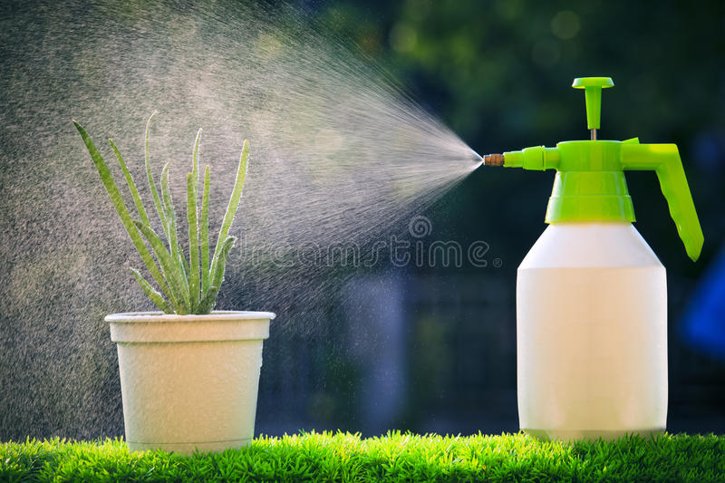 water spray water to red onion plant with beautiful blur backgrund in green house garden on evening stock image