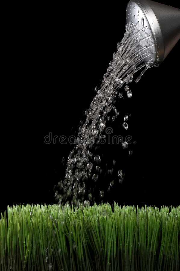 Water sprinking from a silver garden watering can. Vertical image of water sprinking from a silver garden watering jug onto green grass with a black background stock photography