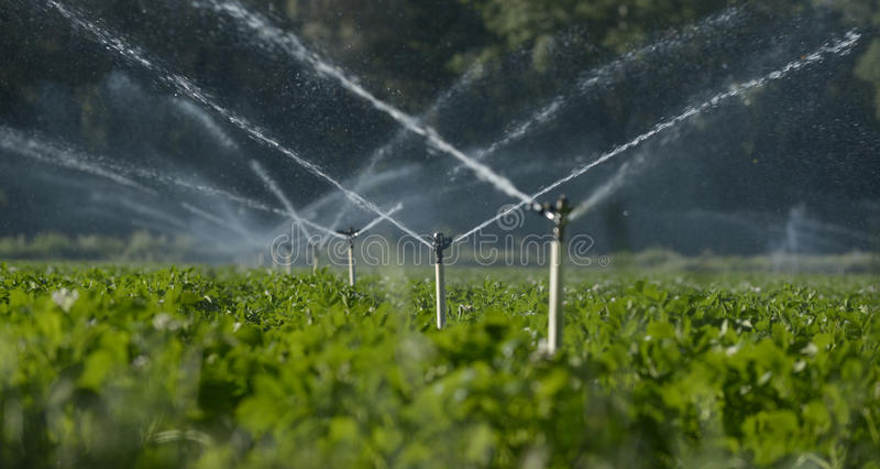 Water sprinklers. Irrigating a field stock photography