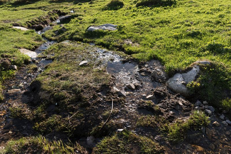 Water and stones in the wet grass royalty free stock photography