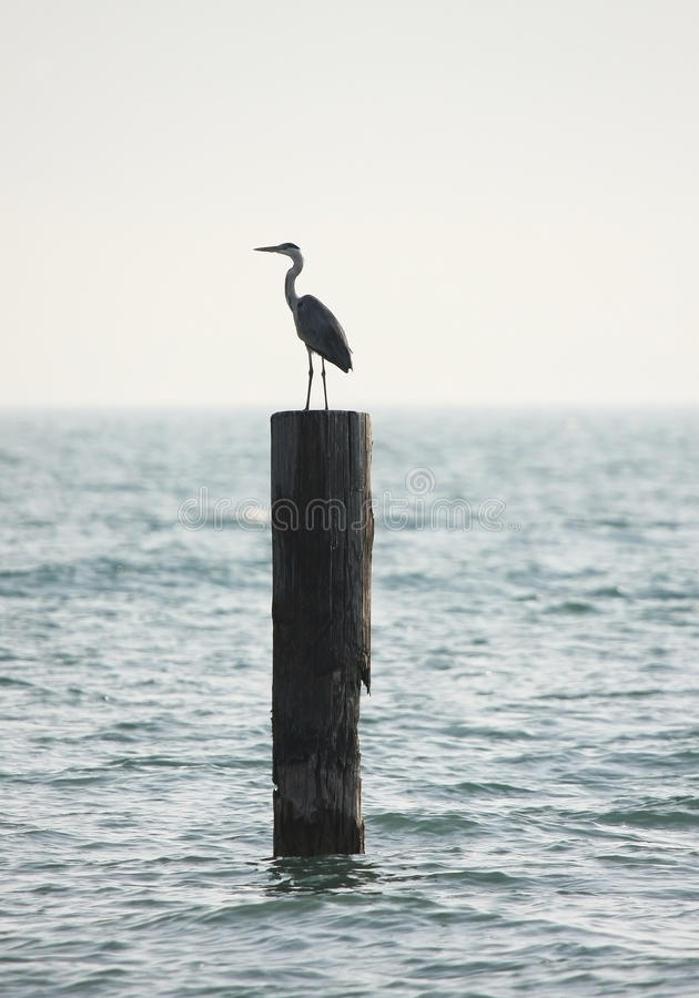 Water stork on a pole royalty free stock image