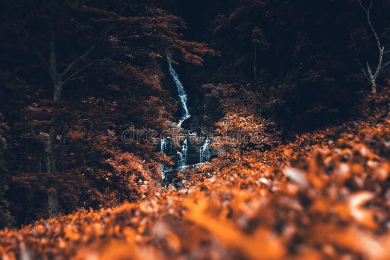 Water Stream Between Brown Leaves royalty free stock image