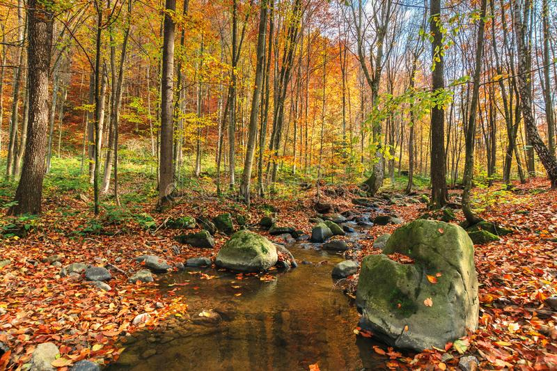 Water stream among the rock in forest royalty free stock image