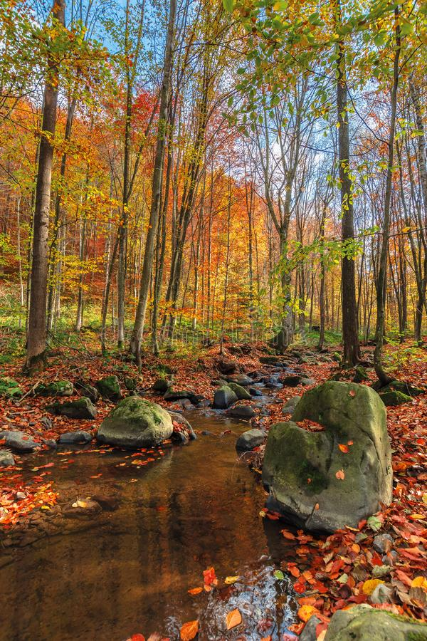 Water stream among the rock in forest stock image