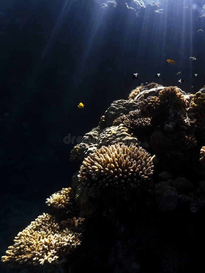 Download Water, sunbeams & corals stock image. Image of underwater - 34248341