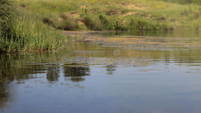 Water surface and the coastline. The Water surface and the coastline royalty free stock images