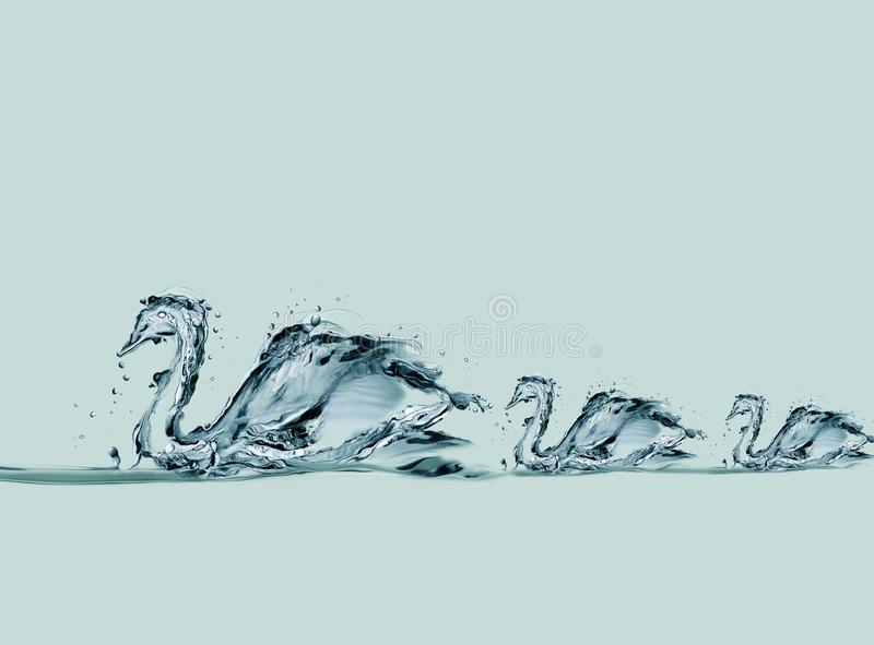 Water Swans Swimming. A family of swans made of water forming a queue while swimming in a lake