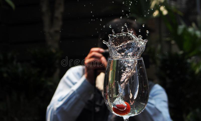 Water, Tree, Stemware, Wine Glass stock images