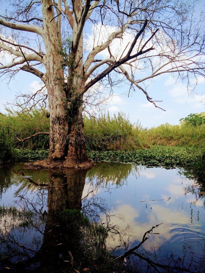 Water tree stock photo
