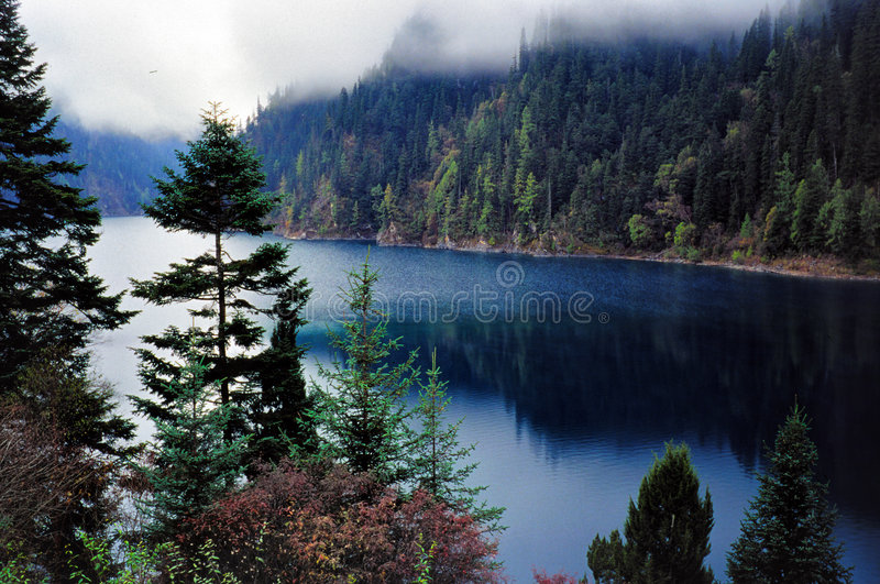 Water trees royalty free stock photos