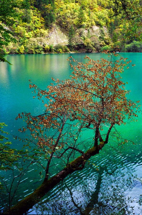 Water trees royalty free stock images