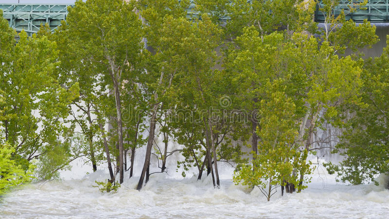 Water trees dam currents. Make for a very dangerous situation royalty free stock photos