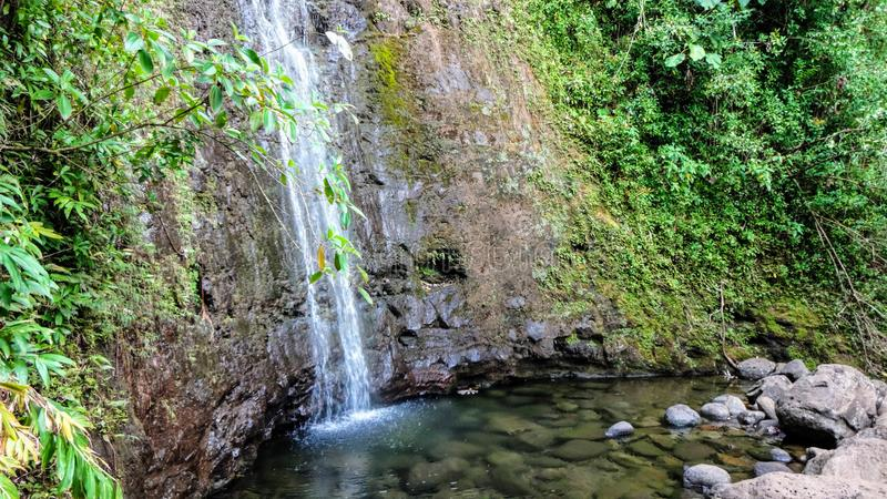 Small waterfall in tropical rainforest. Water trickling down the mountainside covered with green plants is breathtaking and refreshing royalty free stock photos