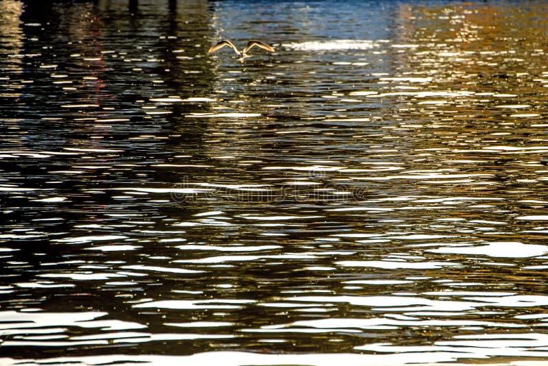 Water van het overzees met zonbezinningen royalty-vrije stock afbeelding