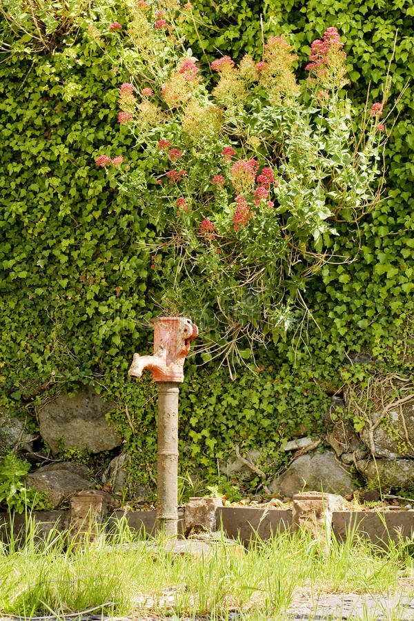 Download A water well pump stock photo. Image of green, garden - 21812308