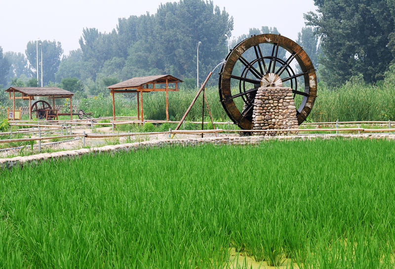 Water Wheel And Rice Royalty Free Stock Images