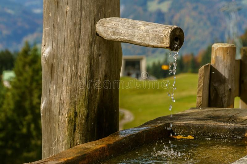 Water, Wood, Tree, Grass royalty free stock image