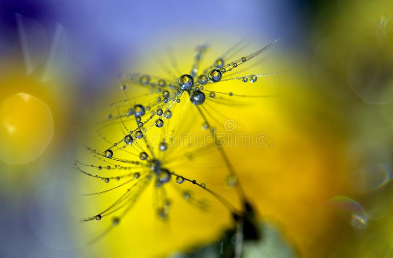 Water, Yellow, Macro Photography, Close Up royalty free stock photography