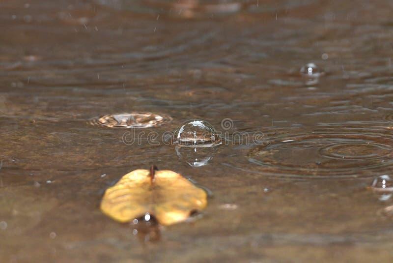 Waterbellen van regendruppels royalty-vrije stock afbeelding