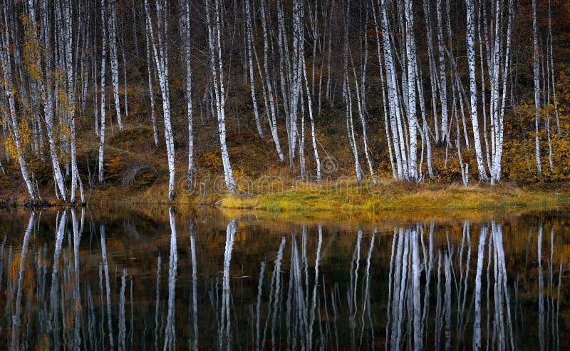 Waterbezinningen van de herfstberk royalty-vrije stock foto