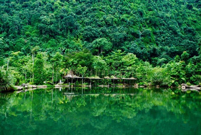 Waterbezinningen van vegetatie Tropische groene boslandschapsmening stock fotografie