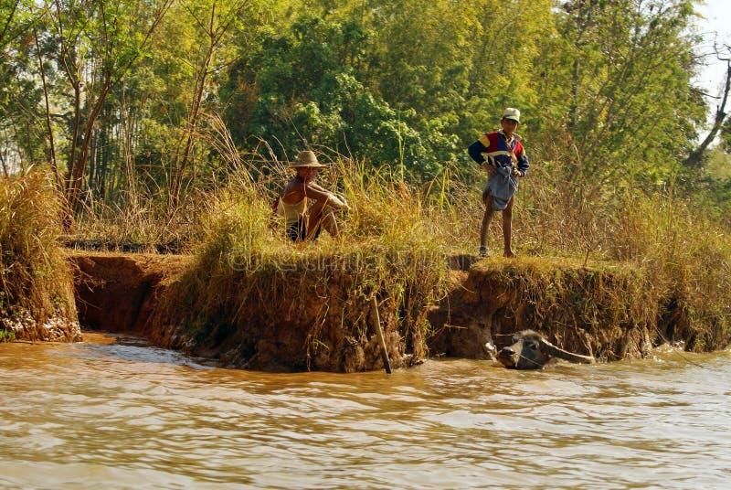 Waterbuffel in een rivier stock fotografie