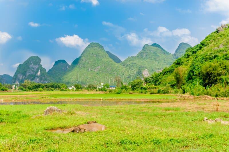 Waterbuffel in Karst landschap door Yangshuo stock afbeeldingen