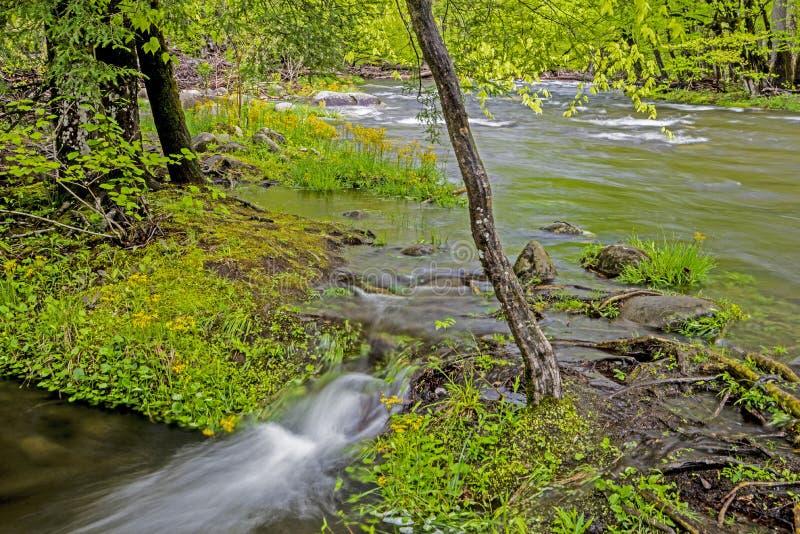 Watercascades over rotsen en keien in Smokies royalty-vrije stock foto